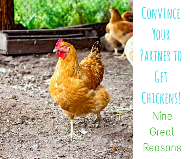 convince-your-partners-to-get-chickens-1